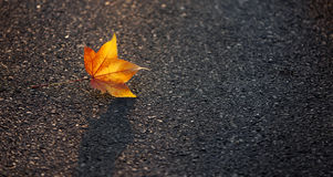 Yellow Leaf Lies on the Pavement. In the Light of the Setting Sun Royalty Free Stock Photo