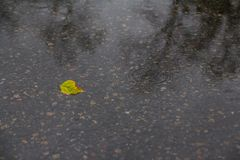 Yellow leaf lies in a puddle. Autum. Rain Stock Photography
