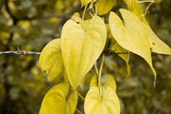 Yellow leaf. Stock Photos