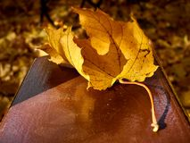 yellow leaf lying on the bench royalty free stock photography