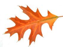 Yellow leaf macro Stock Image