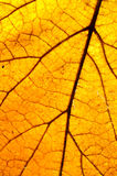 Yellow leaf - macro Royalty Free Stock Photo