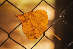 Yellow leaf in a metallic fence. Royalty Free Stock Image