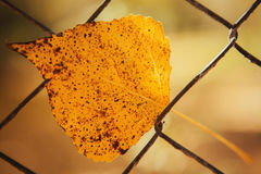 Yellow leaf in a metallic fence. Royalty Free Stock Images