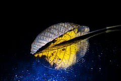 Yellow leaf on the mirror. Yellow autumn leaf on the mirror Royalty Free Stock Photography