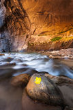 Yellow leaf in The Narrows trail, Zion national park, Utah Royalty Free Stock Images