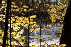 Yellow, Leaf, Nature, Tree royalty free stock photography
