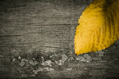 Yellow leaf on an old painted wooden surface Royalty Free Stock Photo