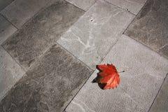 Free Yellow Leaf On Concrete Sidewalk Royalty Free Stock Photos - 114818218