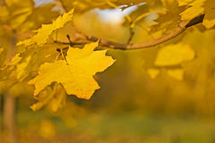 Yellow leaf over blurred colorful background Stock Photography