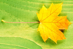 Yellow leaf over green background Stock Images