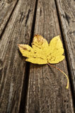 Yellow leaf Royalty Free Stock Image