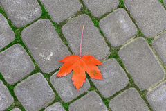 Yellow leaf on paving stone Stock Photo