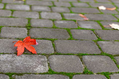 Yellow leaf on paving stone Royalty Free Stock Images