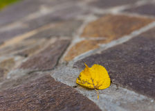 Yellow leaf on paving stone Royalty Free Stock Photo