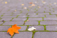 Yellow leaf on paving stone Royalty Free Stock Photography