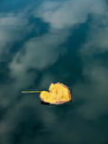 Yellow leaf in puddle Royalty Free Stock Photo