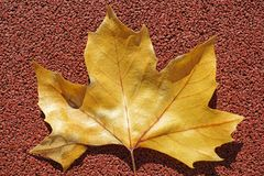 Yellow leaf on a red background in autumn. In summer stock photo