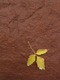 Yellow Leaf on Red Rock. Room for text in upper half of image Royalty Free Stock Images