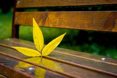 The yellow leaf is reflected on the wet bench in the park_. The yellow leaf is reflected on the wet bench in the park stock photos