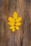 Yellow leaf of rowan lying on a wooden board. Yellow leaf of rowan lying on a rough wooden board Stock Image