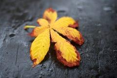 Yellow leaf on slate. Yellow leaf on a dark grey slate Royalty Free Stock Photos