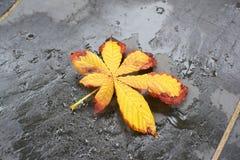 Yellow leaf on slate. Yellow leaf on a dark grey slate Royalty Free Stock Image