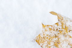 Yellow leaf on snow Royalty Free Stock Photo
