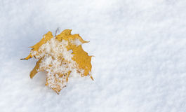 Yellow leaf on snow Royalty Free Stock Photos