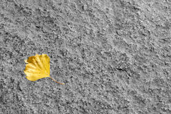 Yellow leaf on a stone Stock Photo