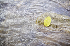 Yellow leaf on the stones. In the river Royalty Free Stock Images