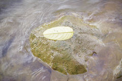 Yellow leaf on the stones. In the river Stock Images
