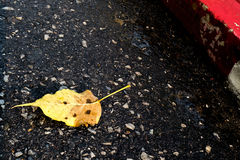 Yellow leaf on street. One yellow leaf floating on flooding street Stock Photography
