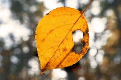 Yellow Leaf on a Sunny Autumn Day with a Hole in It. Blurred Trees in Background. Change of Seasons Concept.  royalty free stock photos