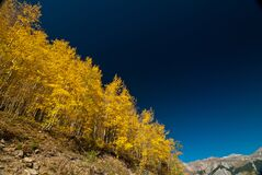 Yellow Leaf Tree on Brown Mountain Slope Royalty Free Stock Photos