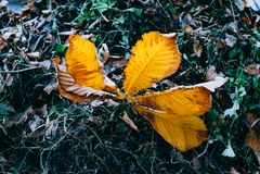 Autumn leaf lies stock photography