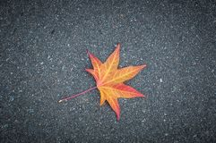 Yellow leaf of a tree lies on gray textured asphalt stock images