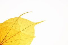 Yellow leaf vein background Stock Photography