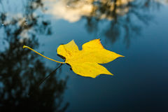 Yellow leaf in water. At fall in the park Royalty Free Stock Image