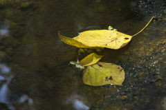 Yellow leaf on water flowing. Royalty Free Stock Image