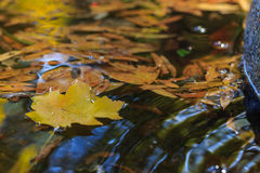 Yellow leaf on water. Yellow maple leaf on the fountain water with other leaves Stock Photography