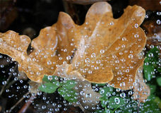 Yellow leaf with water pearls Royalty Free Stock Photography