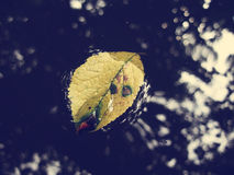 Yellow leaf on water Stock Photos