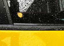 Yellow leaf on a wet car glass Stock Photography