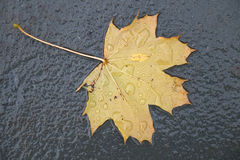 Yellow Leaf On Wet Ground Stock Photos