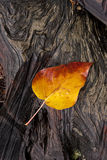 Yellow leaf on wet log. Royalty Free Stock Photos
