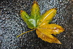 Yellow leaf on a wet pavement during autumn rain Stock Photography