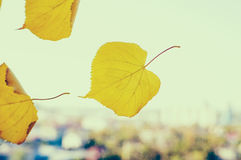 Yellow and green leaf on the window on the background of the city blurred. Stock Photo
