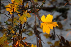 Yellow leaf in winter landscape Royalty Free Stock Photo