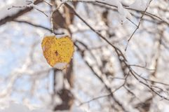 Free Yellow Leaf With Snow Against Blur Forest Winter Season Royalty Free Stock Images - 117201109